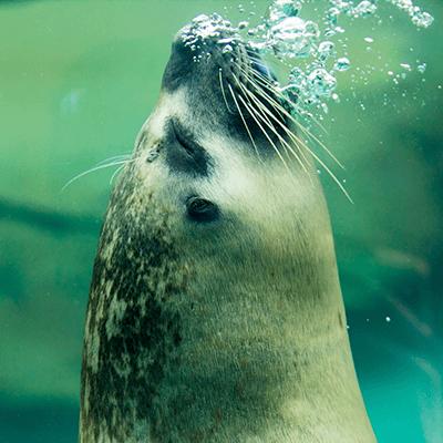 Habor Seal at Henry Vilas Zoo