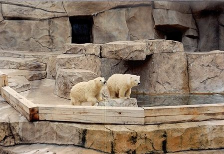 Polar Bear cubs Nanuq and Norton