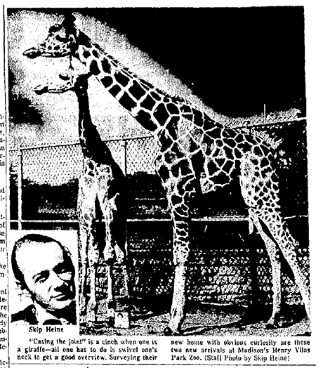 News article about giraffe story