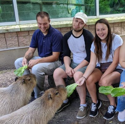 Zoo behind the scenes visitors feeding romaine lettuce to two capybaras.