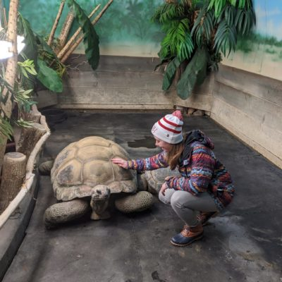 Guest touching an Aldabra Tortoise